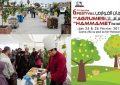 Festival des agrumes de Hammamet : Valoriser le patrimoine agrumicole