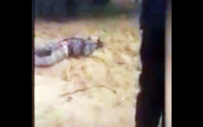 Kairouan : Mandat de dépôt contre un chasseur qui a tué son ami