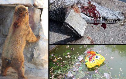 Crocodile tué au zoo : Manifestation dimanche au Belvédère