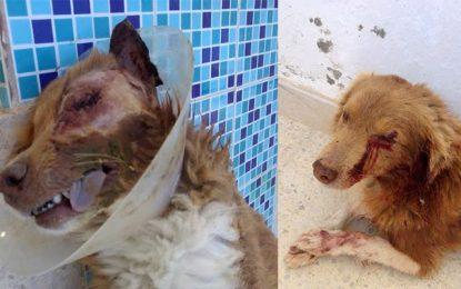 Nabeul : Un français dénonce l'abattage de son chien par des policiers