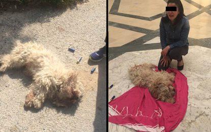 Nabeul : Mojito, un chien abattu devant la maison de ses propriétaires !