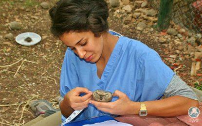 Une Ong dénonce la contrebande des tortues sauvages sorties en Tunisie