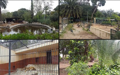 Belvédère : Réaménagé, le zoo rouvrira-t-il pour les vacances scolaires ?