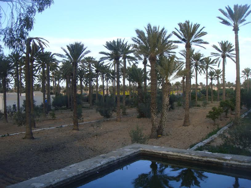 Palmeraie à Djerba