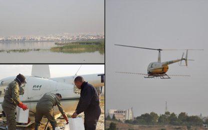 Environnement : La guerre aux moustiques à Sijoumi