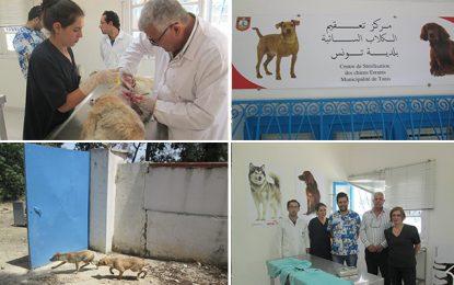 La municipalité de Tunis ne va plus abattre les chiens errants