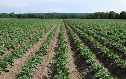 L'État récupère 61.000 ha de terres agricoles à Siliana