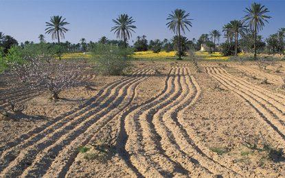 Réunion à Tunis sur l'agro-écologie dans la région Mena