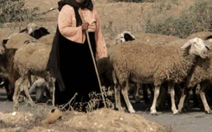 Jebel Salloum : Une bergère décède suite à l'explosion d'une mine