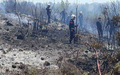 Tunisie : 1000 ha menacés par des incendies d'ici fin août
