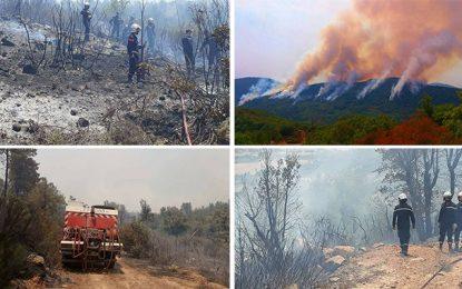 Jendouba : 150 ha de forêts ravagés par des incendies