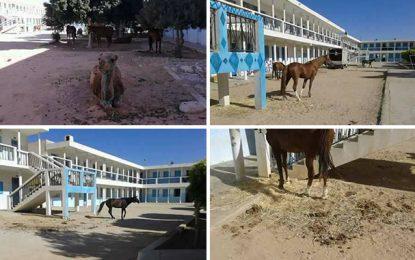 Le lycée de Meknassy transformé en étable !
