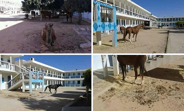Le lycée de Meknassy transformé en étable ! Meknassy-lycée-étable