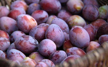 Des prunes non consommables en vente pour 2,4 DT !