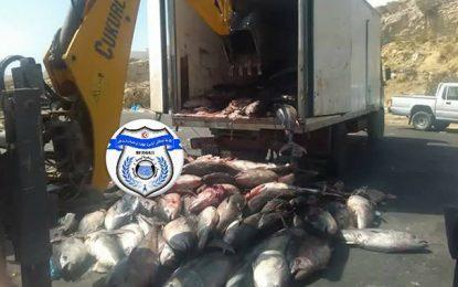 Nabeul : Saisie de 14 tonnes de poissons avariés