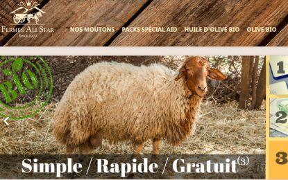 Aid El Kébir : Des moutons bio en vente sur le net