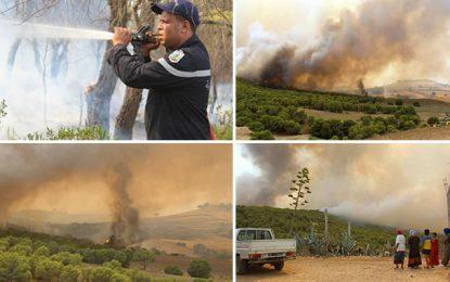 L'incendie regagne Jebel Mansour à El Fahs