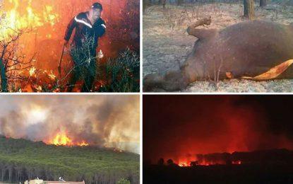 Incendies en Tunisie : La piste terroriste n'est pas écartée