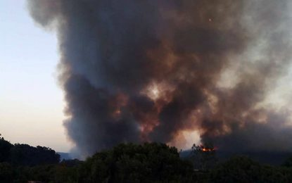 Sejnane : Le feu détruit plusieurs hectares à Cap Serrat