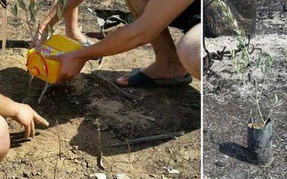 Premier arbre planté après les incendies à Sejnane