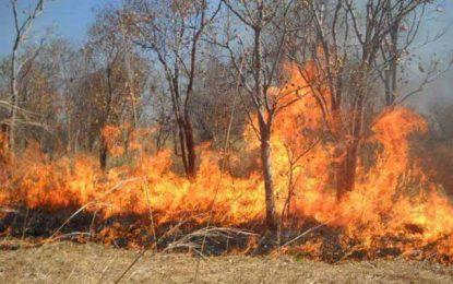 Jendouba : Arrestation de 2 mineurs impliqués dans les incendies