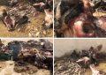 Environnement : Appel à la fermeture de l'abattoir de Djerba