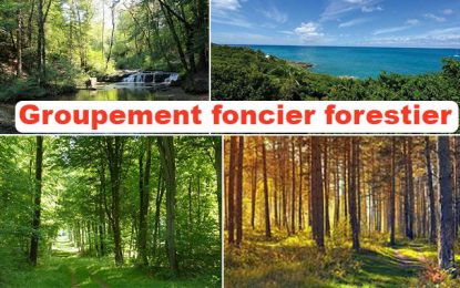 Groupement Foncier Forestier : Un placement attractif