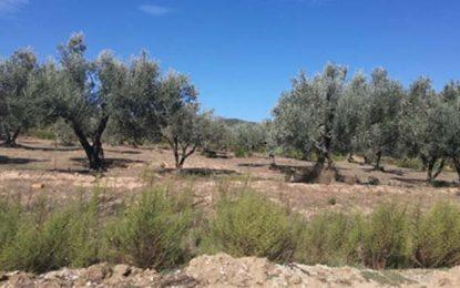L'Etat récupère un terrain de 12 hectares à Sejnane
