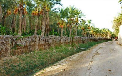 Tunisie : Les oasiens contre l'exploitation du phosphate à Tozeur
