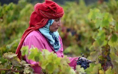 Promouvoir les métiers de l'artisanat des produits agricoles en Tunisie
