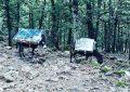 Contrebande : Deux ânes interceptés à Aïn Draham