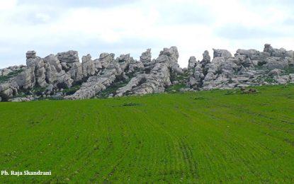 Djebel Gorra au milieu des champs rutilants