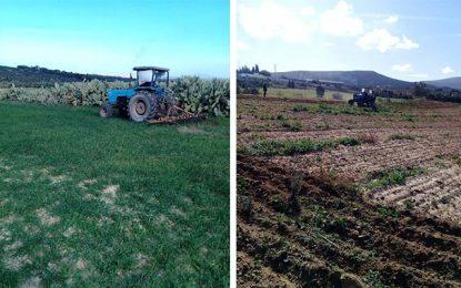 L'Etat récupère 22 hectares de ses terrains à Nabeul