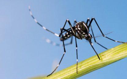 Officiel : Pas de moustique tigre en Tunisie