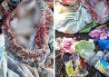 Kef : Le corps d'un bébé retrouvé dans les poubelles