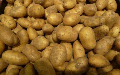 Grombalia : Saisie de 170 tonnes de pommes de terre
