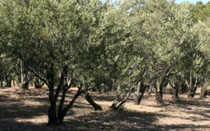 La richesse gastronomique de l'Espagne : Huile d'olive et jamón