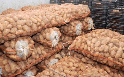Mahdia : Saisie de 25 tonnes de pommes de terre