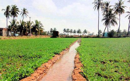 Tunisie: Le ministère de l'Agriculture annonce une nouvelle saison de soif