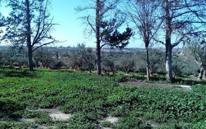 Tunisie : L'Etat récupère 127 hectares de terrains à Zaghouan