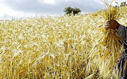 Sécurité alimentaire : La Tunisie en tête des pays africains