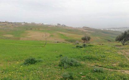 Tunisie : L'Etat récupère un terrain domanial à Mnihla (Ariana)