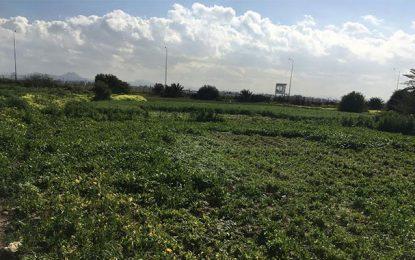 Tunisie : L'Etat récupère un terrain domanial à Soukra