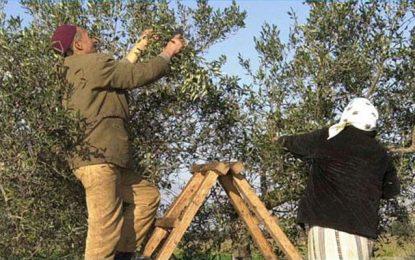 Agriculture : La FAO aide la Tunisie à évaluer ses capacités phytosanitaire