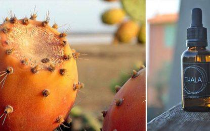 Tunisie : Plus de 5.000 hectares de figues de barbarie certifiées bio