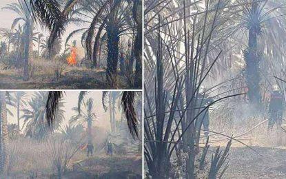 Tunisie-Kébili : Un incendie ravage 200 pieds de palmiers