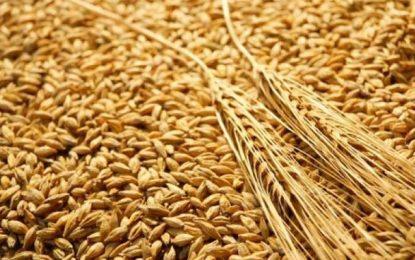 Economie: La Tunisie achète près de 150.000 tonnes de blé et d'orge