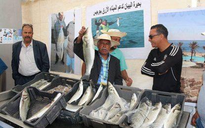 Le port bleu de Zarzis pour promouvoir la pêche artisanale durable