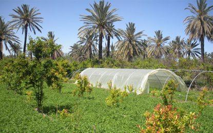 Gabès : Les oasis, un écosystème créateur de richesses à protéger