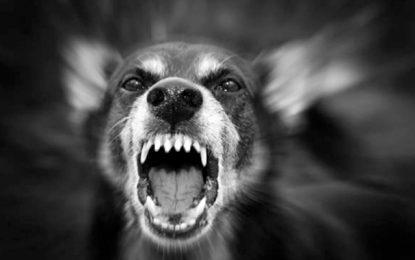 Attaquées par un chien errant, deux dames âgées hospitalisées à Haffouz
